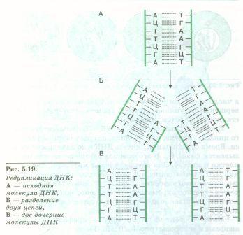 C:\Documents and Settings\Admin\Рабочий стол\Самостоятельная работа уч-ся с учебником\SWScan00079.jpg