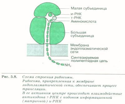 C:\Documents and Settings\Admin\Рабочий стол\Самостоятельная работа уч-ся с учебником\SWScan000751.jpg