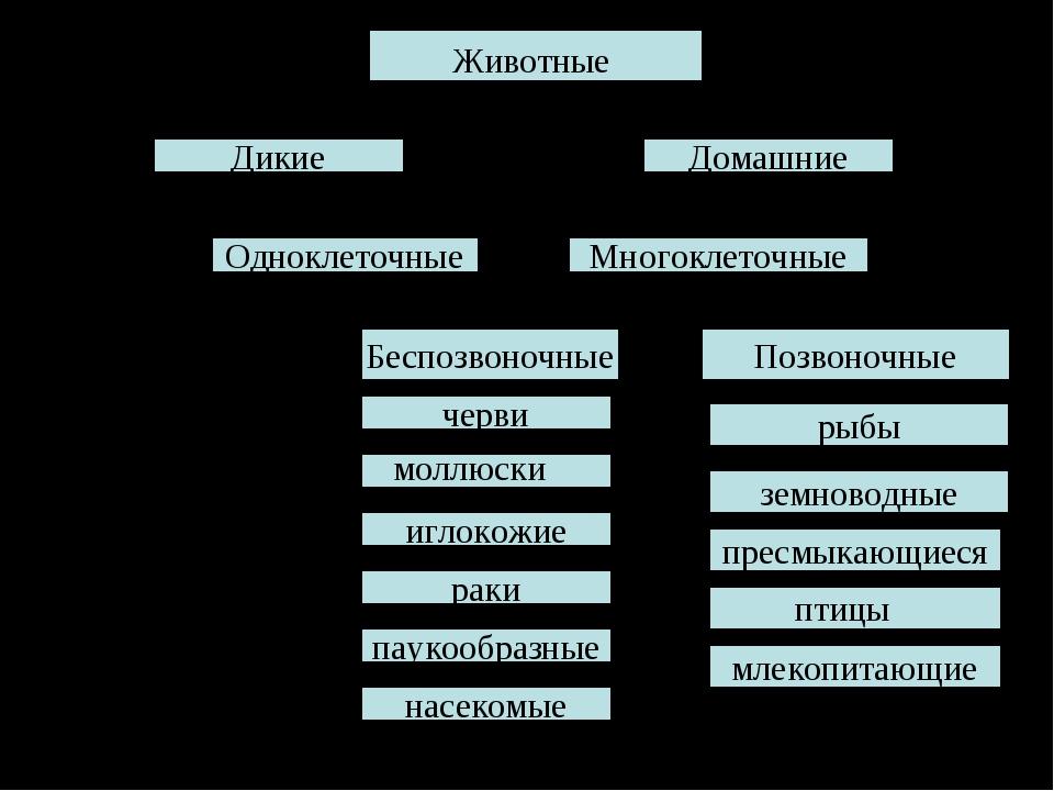 Домашние Дикие Одноклеточные Многоклеточные Беспозвоночные Позвоночные черви...