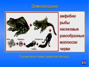 Земноводные Рассмотрите схему развития лягушки.