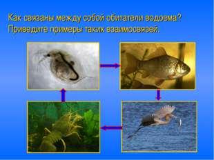 Как связаны между собой обитатели водоема? Приведите примеры таких взаимосвяз