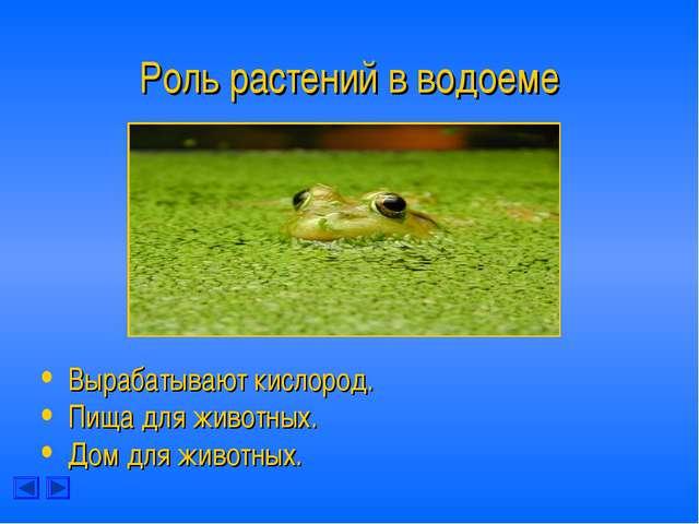 Роль растений в водоеме Вырабатывают кислород. Пища для животных. Дом для жив...