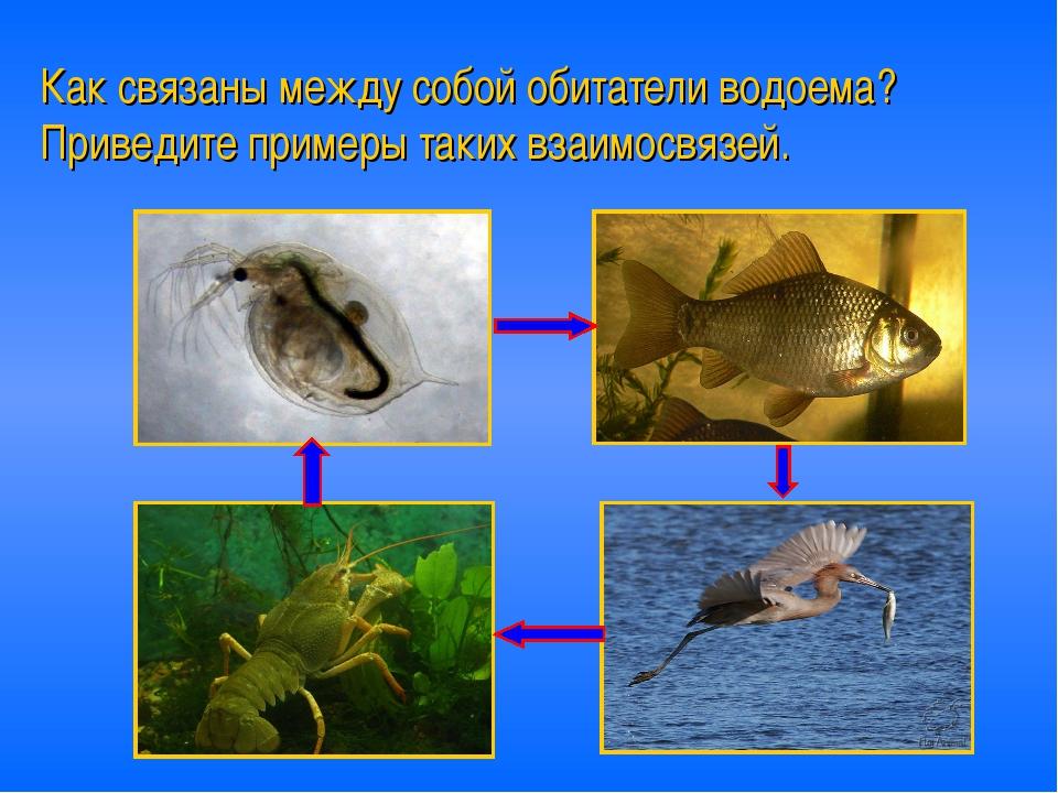 Как связаны между собой обитатели водоема? Приведите примеры таких взаимосвяз...