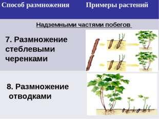 Надземными частями побегов 7. Размножение стеблевыми черенками 8. Размножение