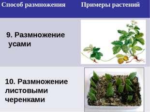 9. Размножение усами 10. Размножение листовыми черенками Способ размноженияП