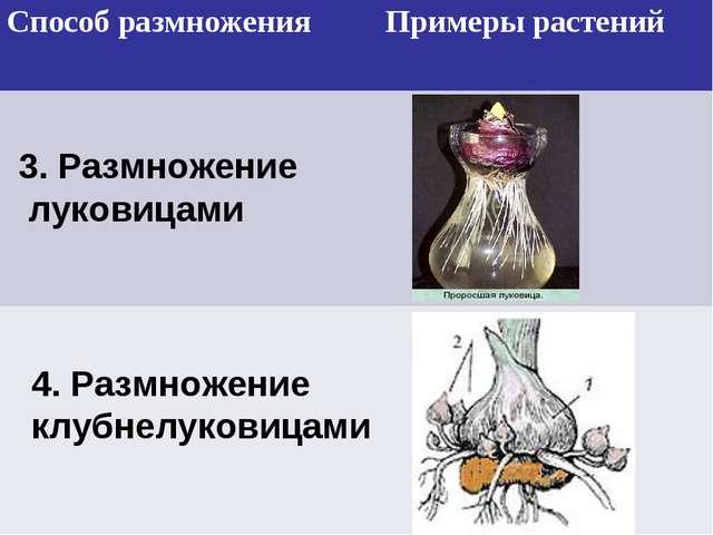 3. Размножение луковицами 4. Размножение клубнелуковицами Способ размножения...