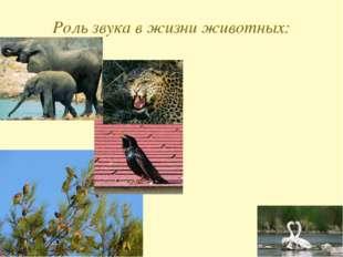 Роль звука в жизни животных: