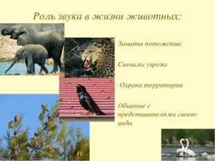 Роль звука в жизни животных: Защита потомства Сигналы угрозы Охрана территор