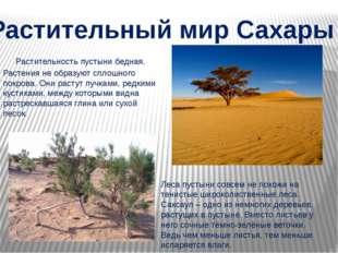 Растительность пустыни бедная. Растения не образуют сплошного покрова. Они р
