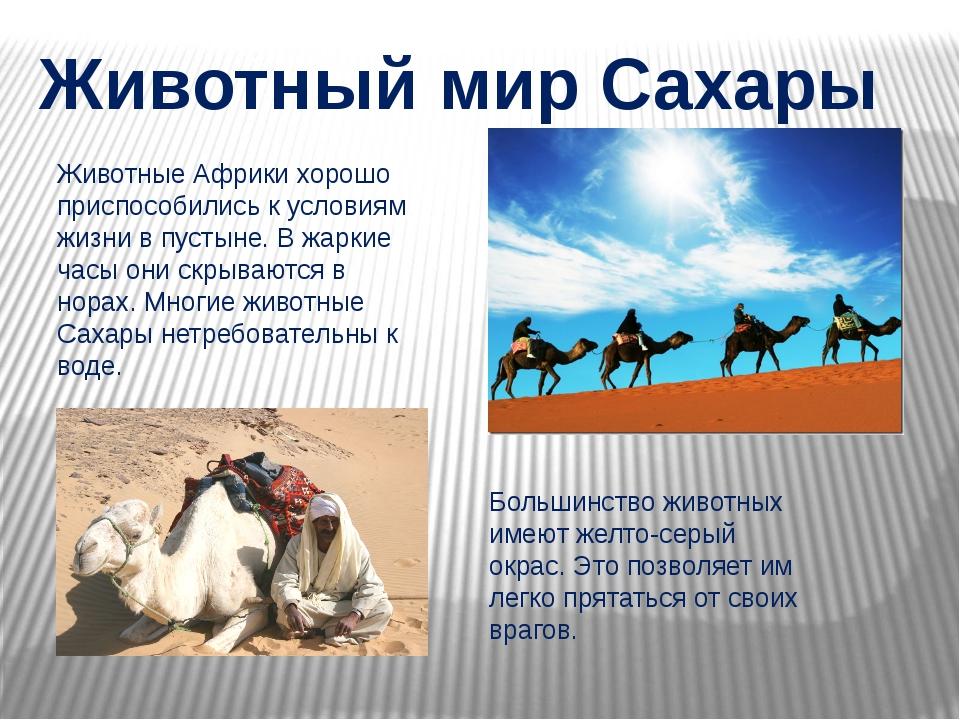 Животный мир Сахары Животные Африки хорошо приспособились к условиям жизни в...