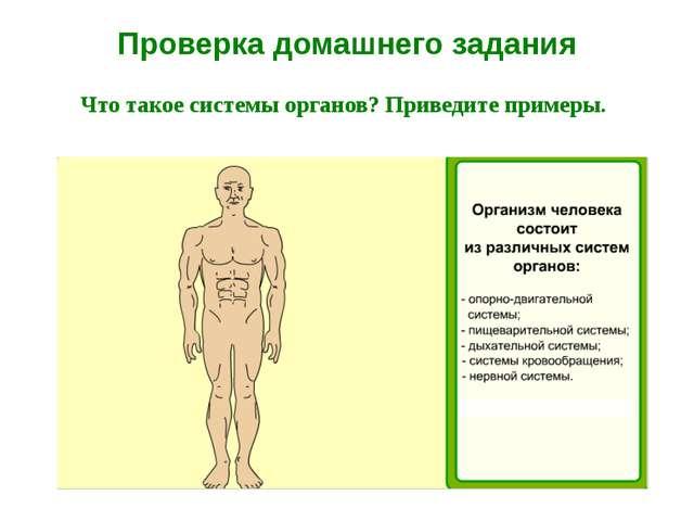 Проверка домашнего задания Что такое системы органов? Приведите примеры.