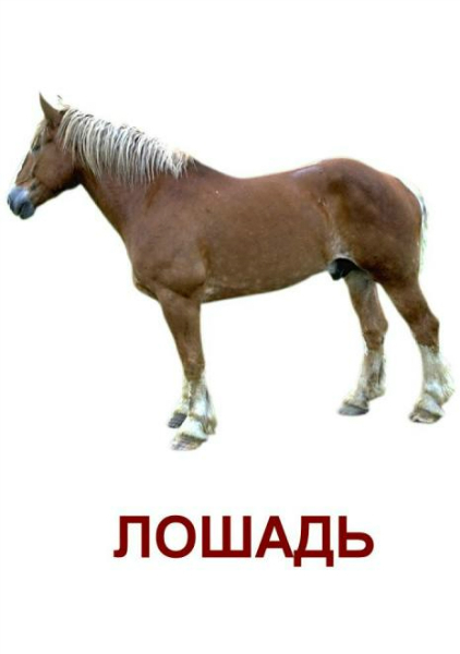 http://img3.imgbb.ru/c/3/5/c35999a349559a273b9c2a0421d6bcbe.jpg