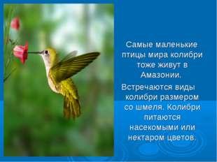 Самые маленькие птицы мира колибри тоже живут в Амазонии. Встречаются виды к