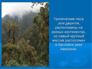 Тропические леса ,или джунгли, расположены на разных континентах, но самый к