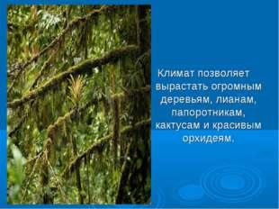 Климат позволяет вырастать огромным деревьям, лианам, папоротникам, кактусам