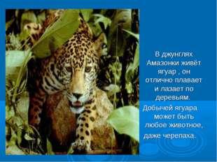 В джунглях Амазонки живёт ягуар , он отлично плавает и лазает по деревьям. Д