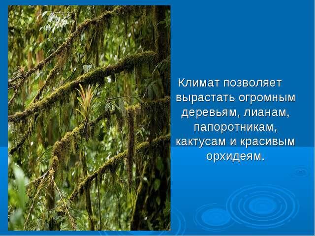 Конспект с презентацией 4 класс в экваториальных лесах южной америки