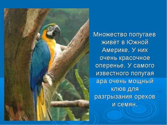Множество попугаев живёт в Южной Америке. У них очень красочное оперенье. У...