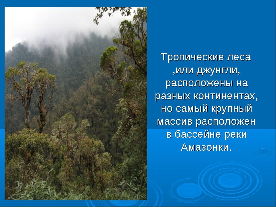 Тропические леса ,или джунгли, расположены на разных континентах, но самый к...