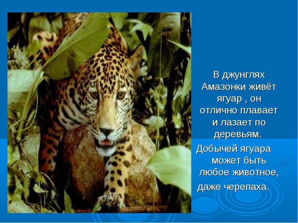 В джунглях Амазонки живёт ягуар , он отлично плавает и лазает по деревьям. Д...