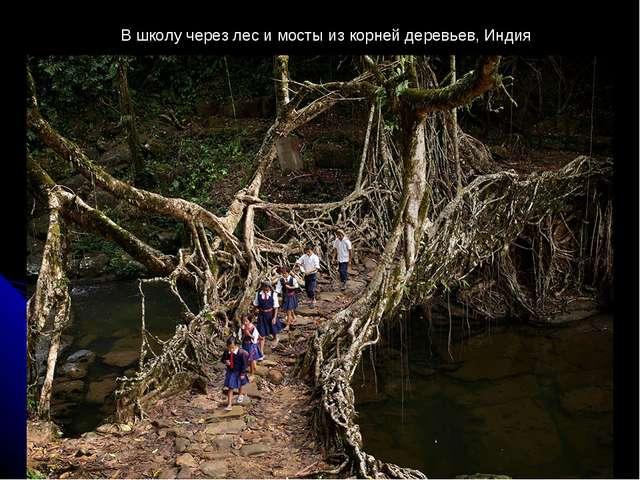 В школу через лес и мосты из корней деревьев, Индия