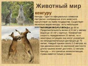Животный мир Кенгуру – один из официальных символов Австралии: изображение эт
