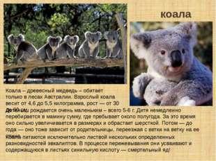 коала Коала питаются исключительно листвой нескольких определенных разновидно