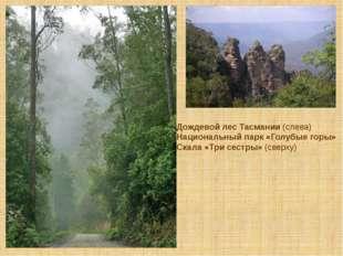 Дождевой лес Тасмании (слева) Национальный парк «Голубые горы» Скала «Три сес