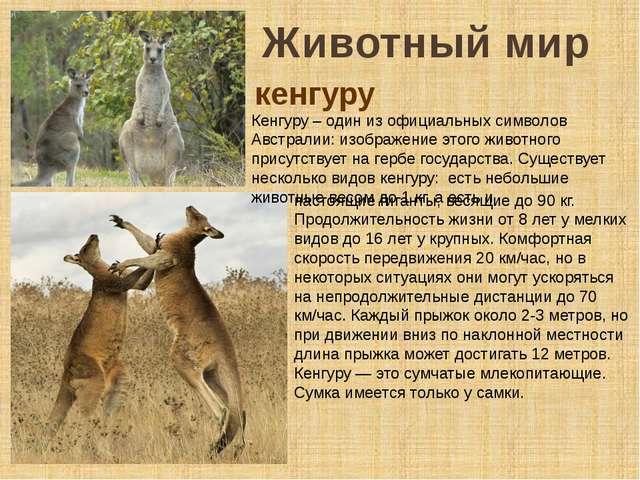 Животный мир Кенгуру – один из официальных символов Австралии: изображение эт...
