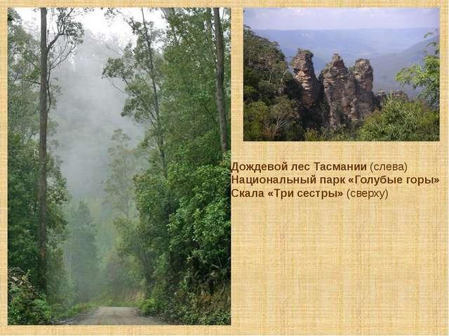 Дождевой лес Тасмании (слева) Национальный парк «Голубые горы» Скала «Три сес...