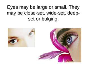 Eyes may be large or small. They may be close-set, wide-set, deep-set or bulg