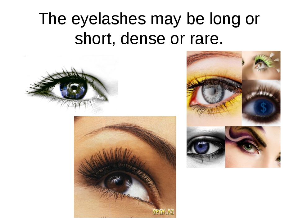 The eyelashes may be long or short, dense or rare.
