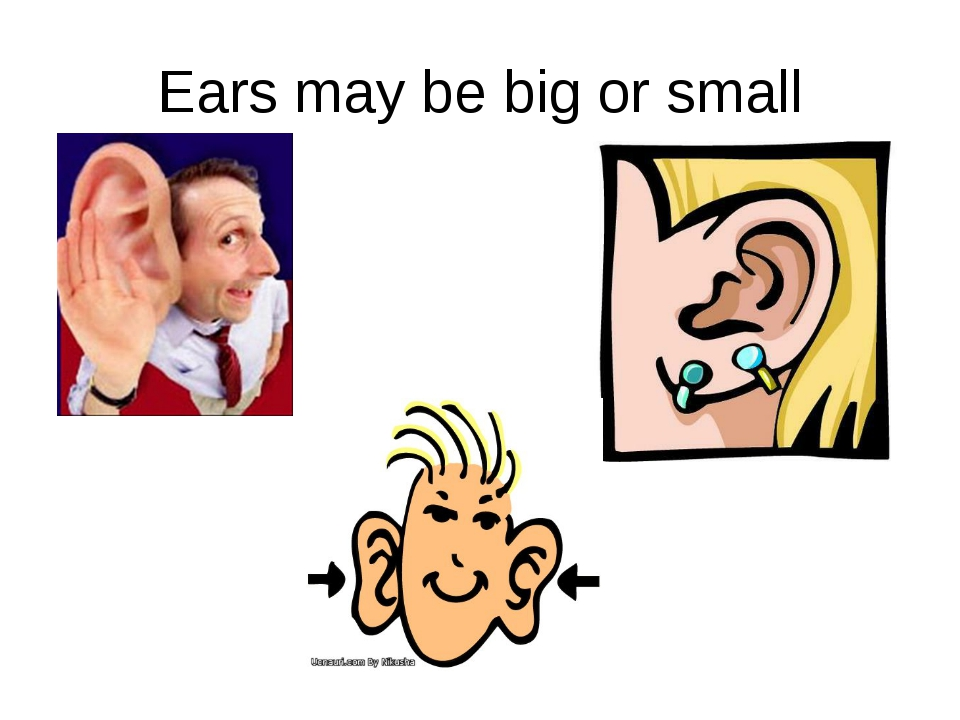 Ears may be big or small
