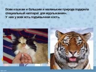 Всем кошкам и большим и маленьким природа подарила специальный «аппарат для м