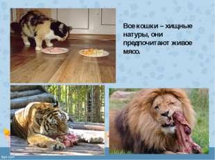 Все кошки – хищные натуры, они предпочитают живое мясо.