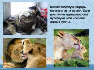 Кошки в первую очередь полагаются на запахи. Если все пахнут одинаково, они ч