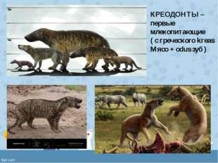 КРЕОДОНТЫ – первые млекопитающие ( с греческого kreas Мясо + odus зуб )