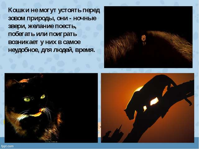 Кошки не могут устоять перед зовом природы, они - ночные звери, желание поест...