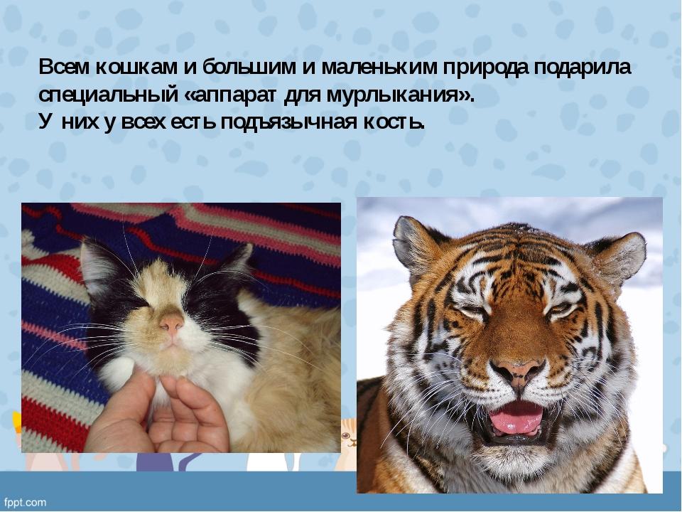 Всем кошкам и большим и маленьким природа подарила специальный «аппарат для м...