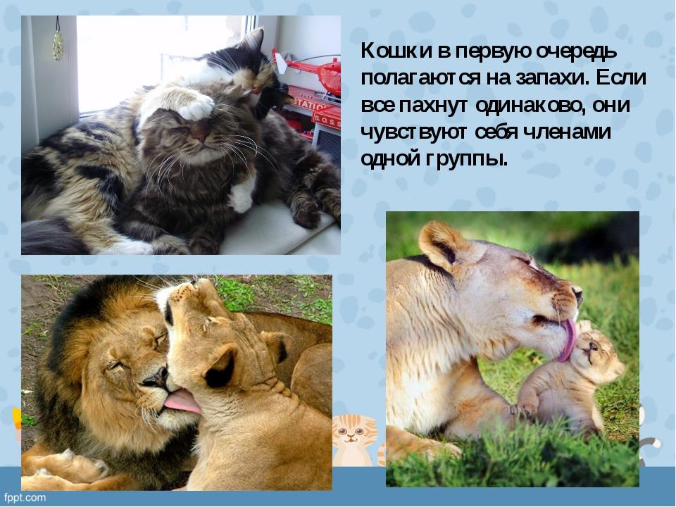 Кошки в первую очередь полагаются на запахи. Если все пахнут одинаково, они ч...