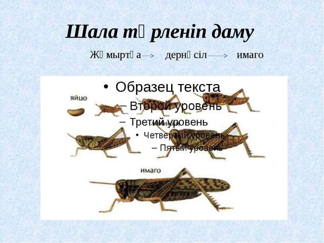Шала түрленіп даму Жұмыртқа дернәсіл имаго