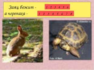 Заяц бежит - а черепаха - 123456 12345678