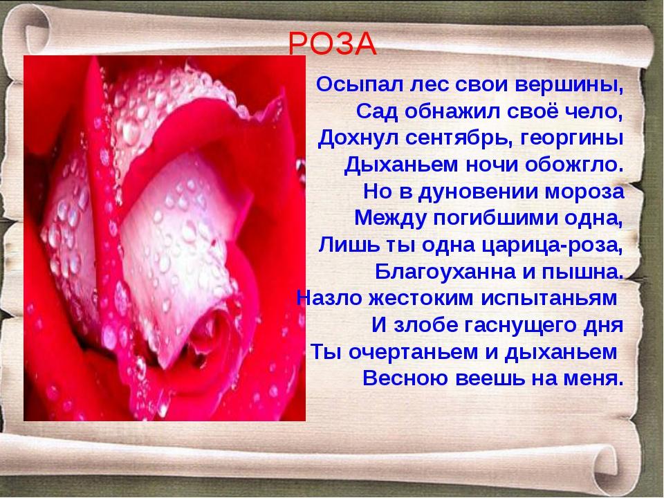 РОЗА Осыпал лес свои вершины, Сад обнажил своё чело, Дохнул сентябрь, георгин...