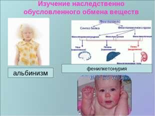 Изучение наследственно обусловленного обмена веществ альбинизм фенилкетонурия