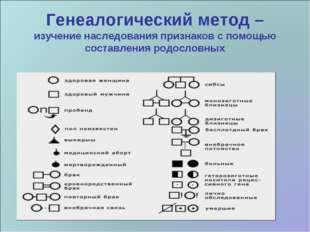 Генеалогический метод – изучение наследования признаков с помощью составления