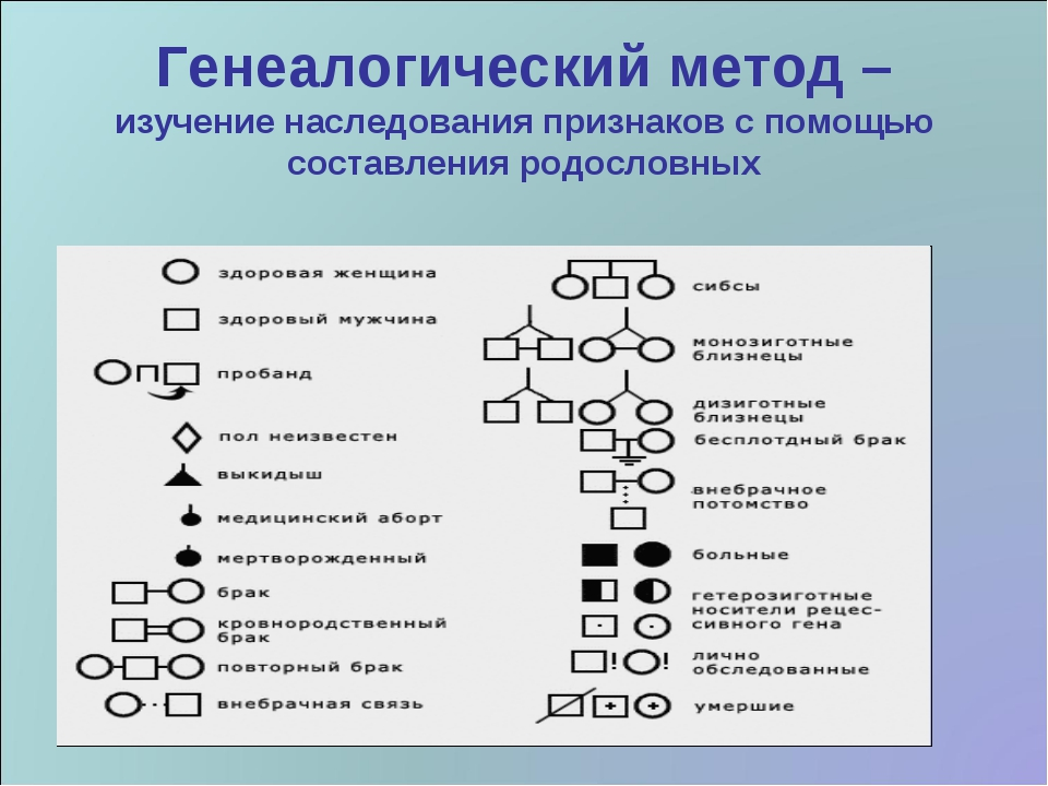 Генеалогический метод – изучение наследования признаков с помощью составления...