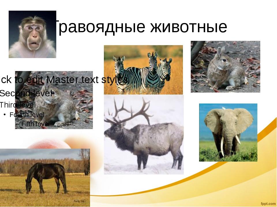 Травоядные животные
