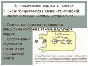 Проникновение вируса в клетку Вирус прикрепляется к клетке и генетический мат
