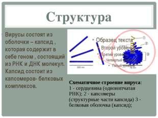 Структура Вирусы состоят из оболочки – капсид , которая содержит в себе геном