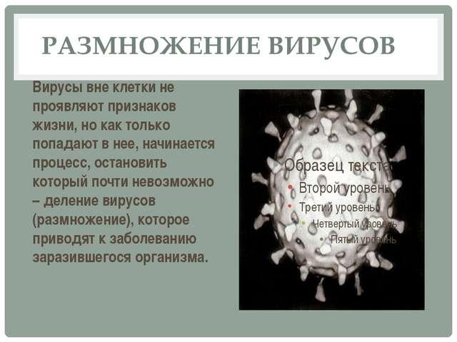 Вирусы вне клетки не проявляют признаков жизни, но как только попадают в нее,...